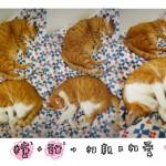 cat-love-too