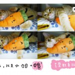 cat-sleep-all-day-03