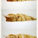 fat-cat-sugar